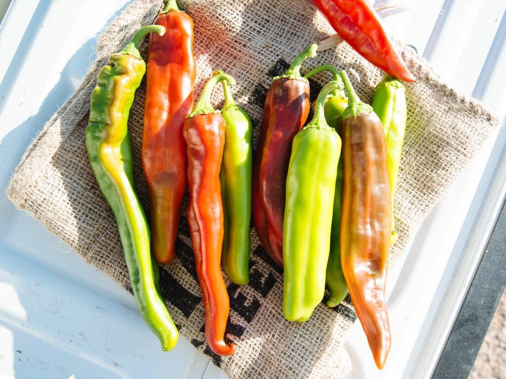 Fresh hatch chile