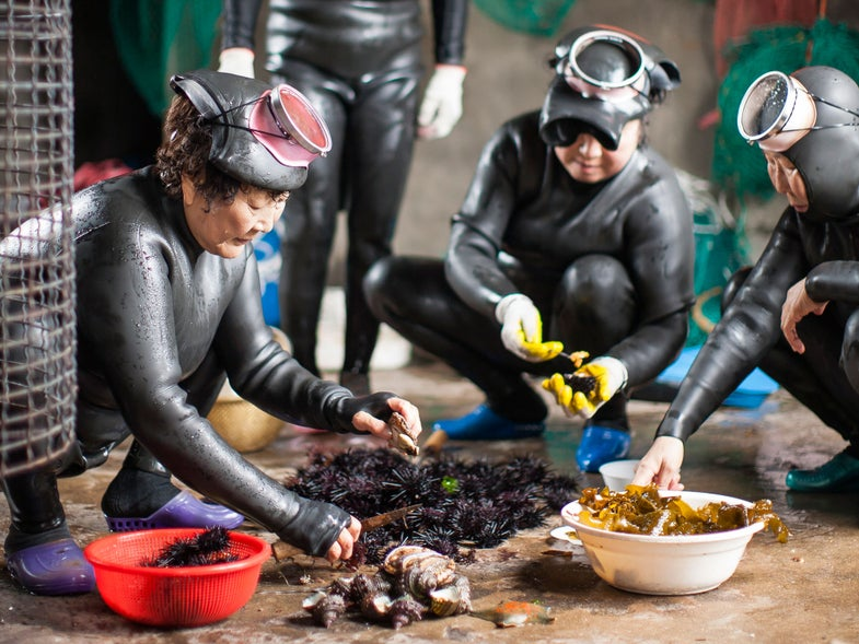 The 50-Year-Old Women Diving for Sea Urchin in South Korea