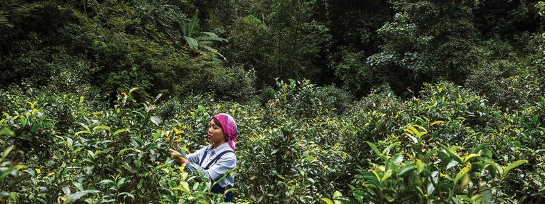 Video: Inside the Hidden World of China's Most Coveted Tea