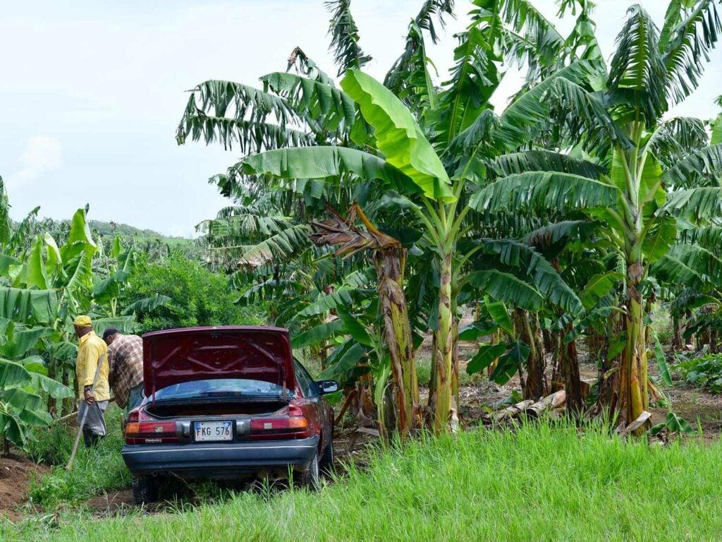 puerto rico farm