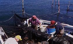 Fishing the Pound Trap