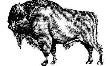 Guiltless Luxury: Sustainable Meats