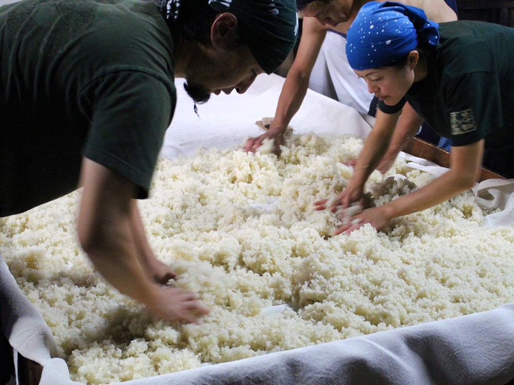 Why I Flew All the Way to Japan to Learn About Rice Mold