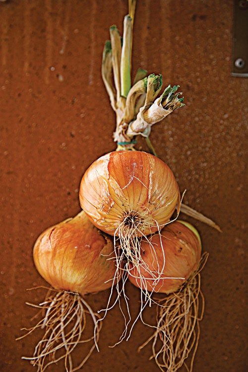 httpswww.saveur.comsitessaveur.comfilesimport20142014-03scenes-from-the-dalamatian-coast-a-bundle-of-onions-500×750-i164.jpg