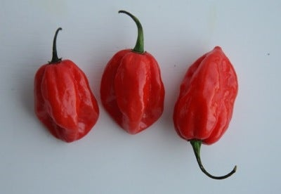 Chile Pepper Glossary