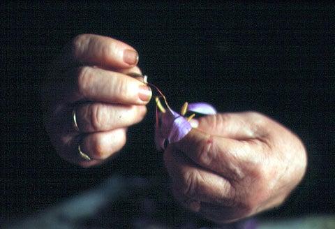 httpswww.saveur.comsitessaveur.comfilesimport2007images2007-1206_buying-saffron_09.jpg