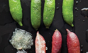 Tiny Giant: The Beauty of Finger Limes