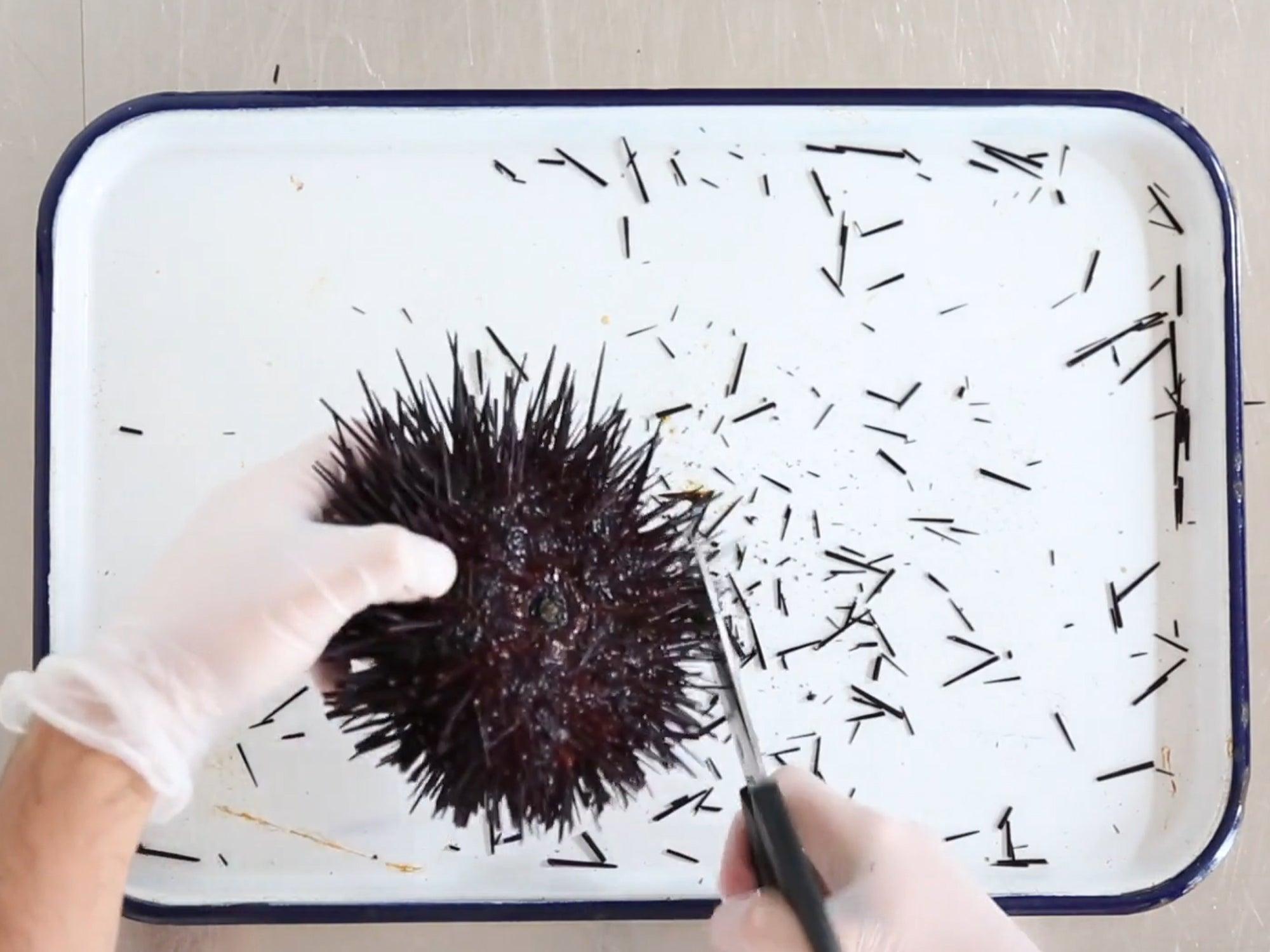 Basics: How to Prepare Sea Urchin