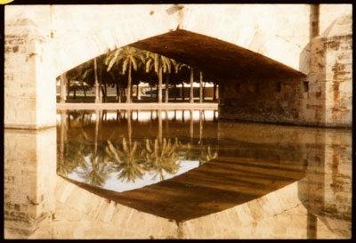 httpswww.saveur.comsitessaveur.comfilesimport2010images2010-127-SV85-Valencia-Palms-400.jpg