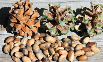 The Nutty Coffee that Fuels New Mexico