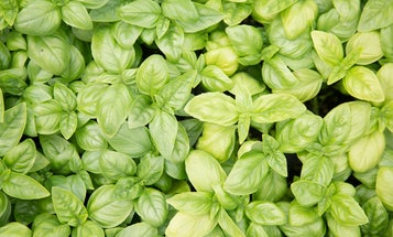 Building A Garden: Why Growing Herbs is Easy