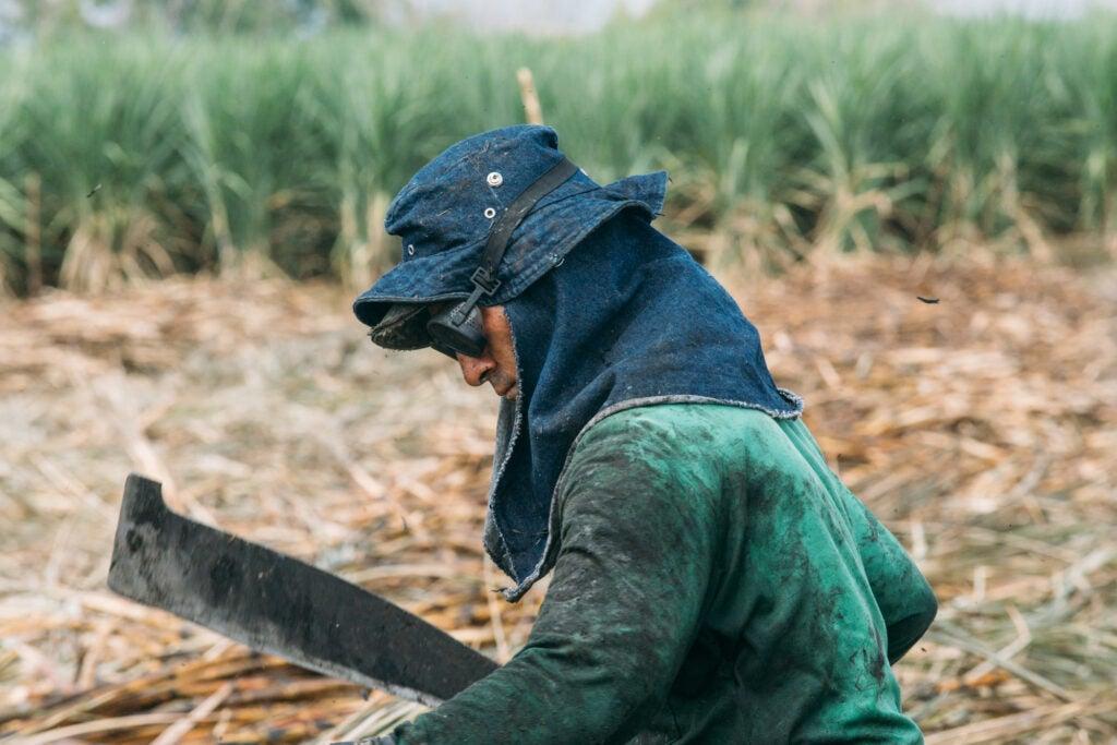 Sugar Cane Harvester, Colombia