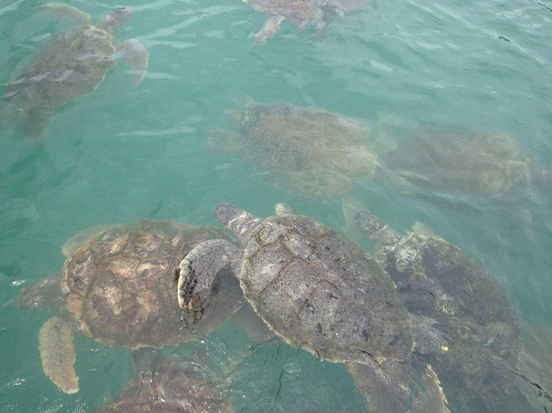 The Island Where Sea Turtles Are Still a Delicacy