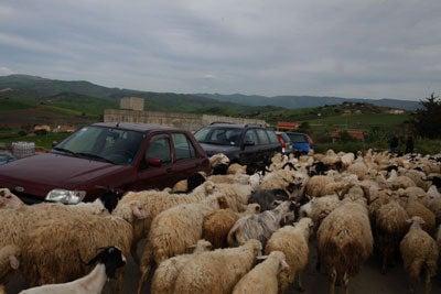 httpswww.saveur.comsitessaveur.comfilesimport2011images2011-027-SV136_-_Sicily_-_21.jpg