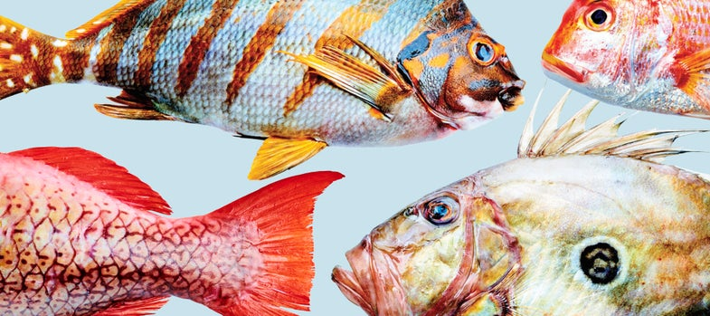 SAVEUR Oceans Issue Event Rules