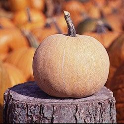 Prized Pumpkins