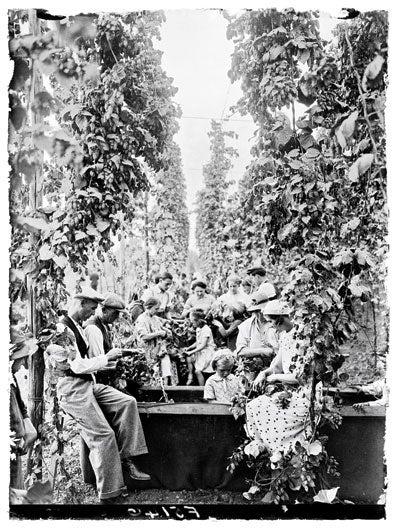 Flower Power: Fresh Hop Beers