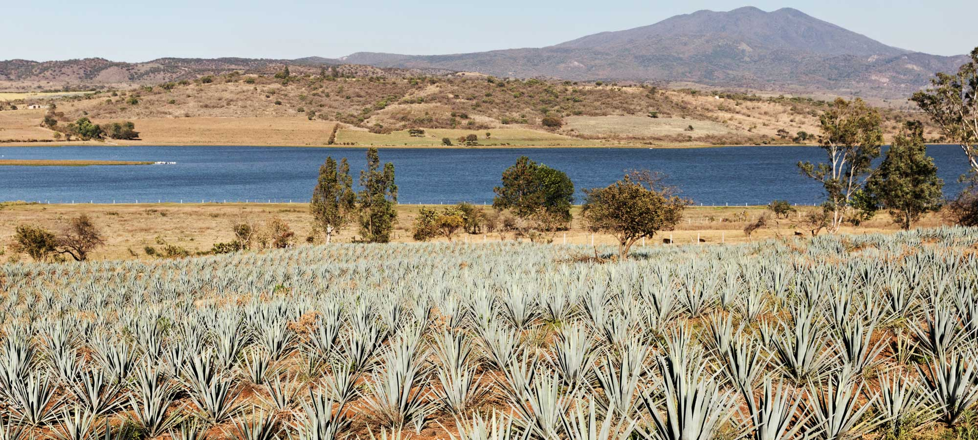 What Happens When You Treat Making Tequila Like Champagne