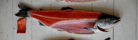 httpswww.saveur.comsitessaveur.comfilesimport2008images2008-05634-112_know_your_salmon_2_480.jpg