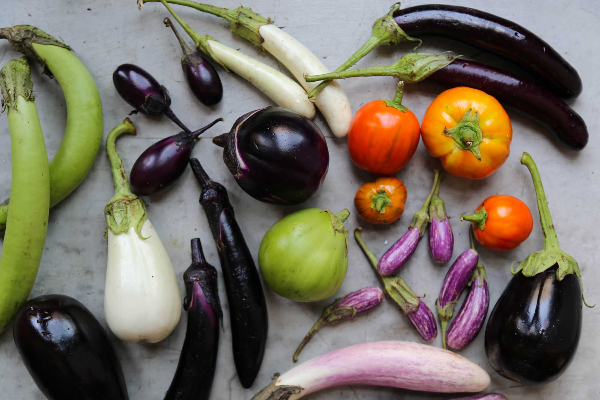 Eggplants Have a Weird, Dysfunctional Family. Come Meet Them.
