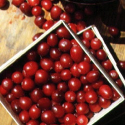 Where Cranberries Come From