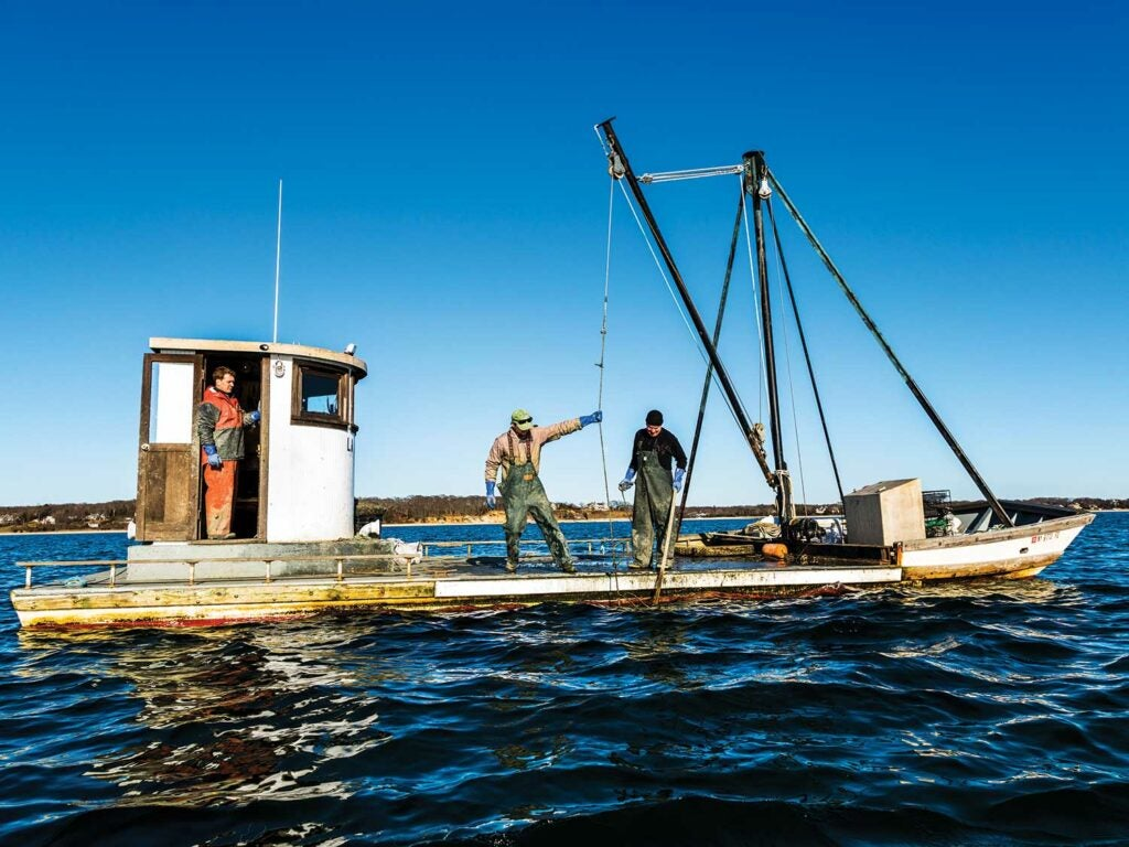 oyster crew winches up a cage
