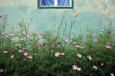 Flowers outside a house in Biertan