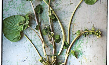 Mean Green: Wasabi Root