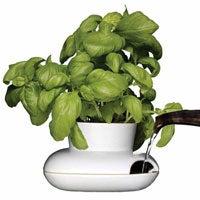 herb pot gift