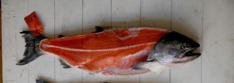 httpswww.saveur.comsitessaveur.comfilesimport2008images2008-05634-112_know_your_salmon_1_480.jpg