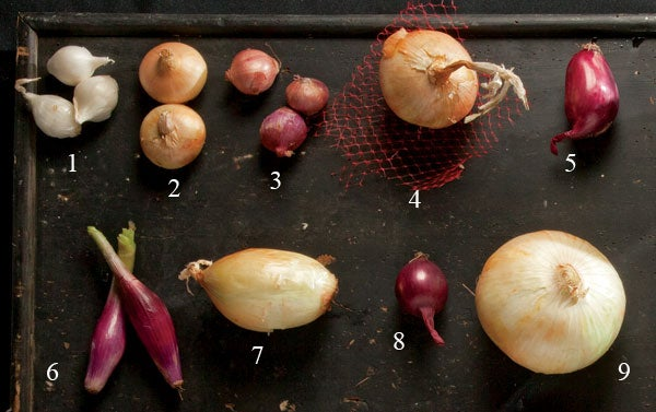 Types of Onion Guide
