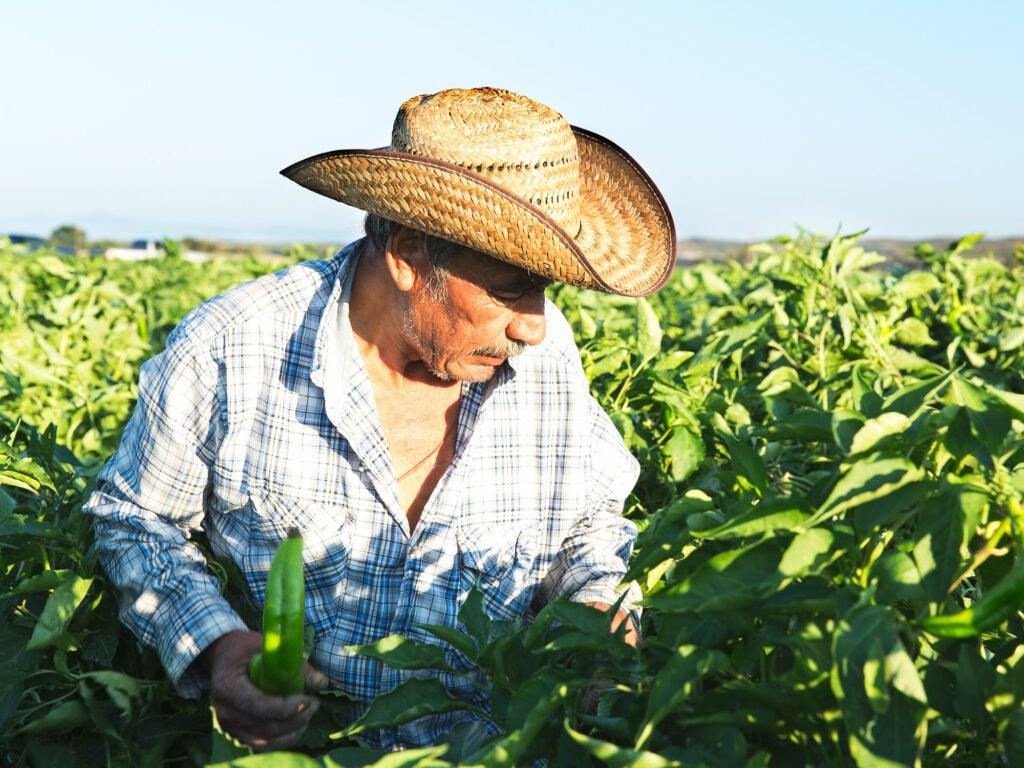 Hatch farmer