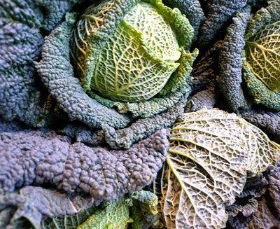 Appreciating Cabbage