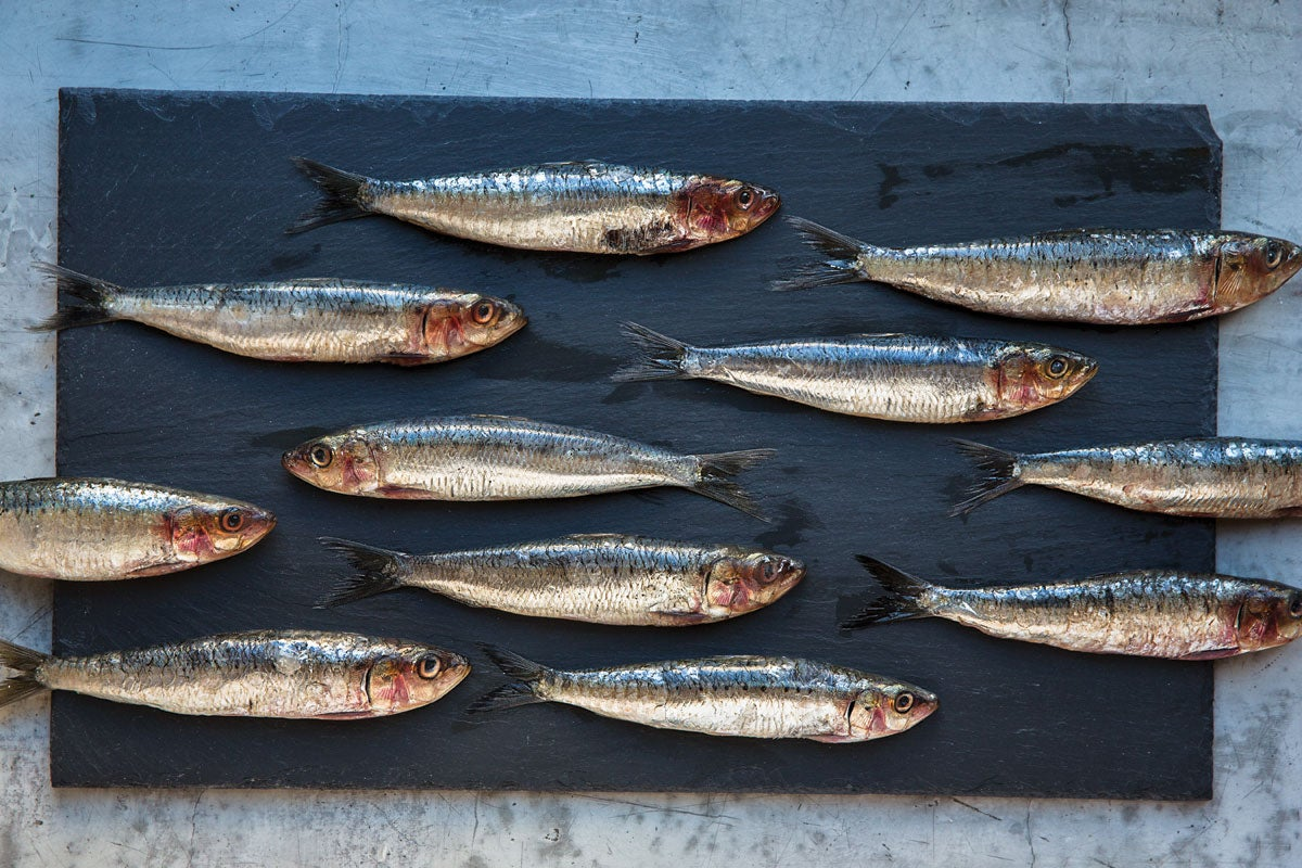feature-forgotten-fish-sardines-1200x800-i164