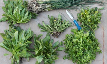 These 10 Invasive Plant Species Are Surprisingly Delicious
