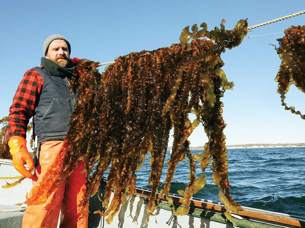 This Farmer Thinks Kelp Will Help Save the World