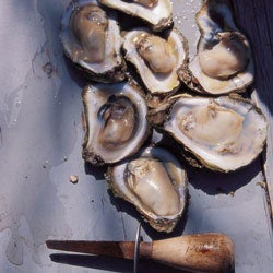 To Prepare a Lowcountry Oyster Roast
