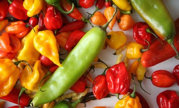 A World of Peppers