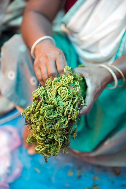 planning india trip vegetables