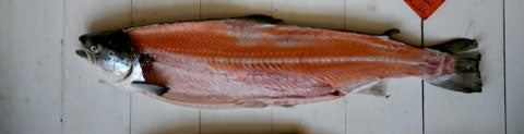 httpswww.saveur.comsitessaveur.comfilesimport2008images2008-05634-112_know_your_salmon_4_480.jpg