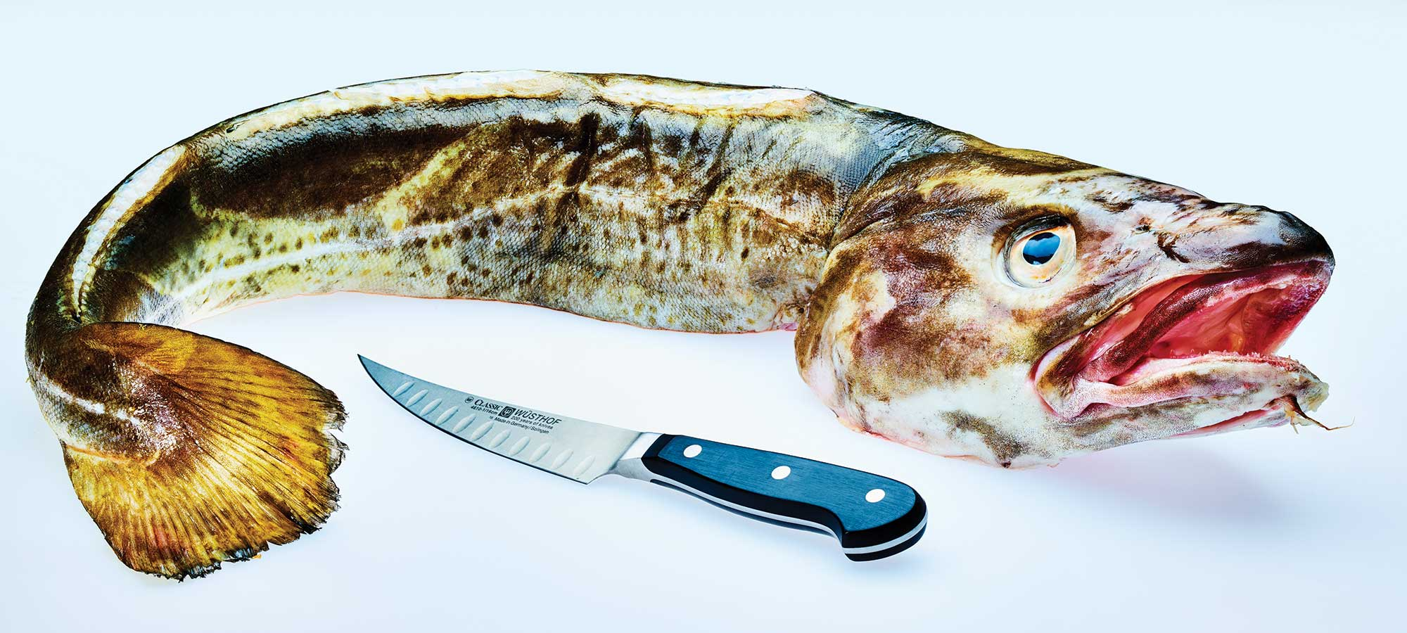 a whole fish and a knife