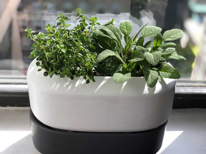 Chef'n self watering pot