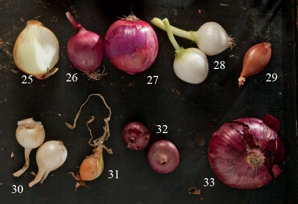 types of onions Maui onions, Red zeppelin, Red burgermeisters, Paris silver-skins, French shallots, Crystal white wax, Jet set, Flat of Italy, Giant red hamburger