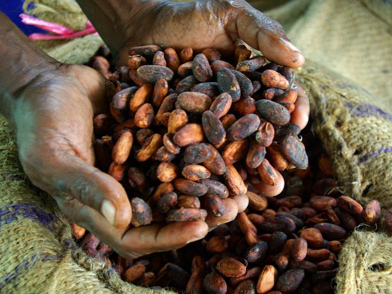 The Chilling Connection Between Chocolate and Child Slavery May Be Getting its Day in Court