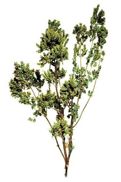 Essential Herb of Greece