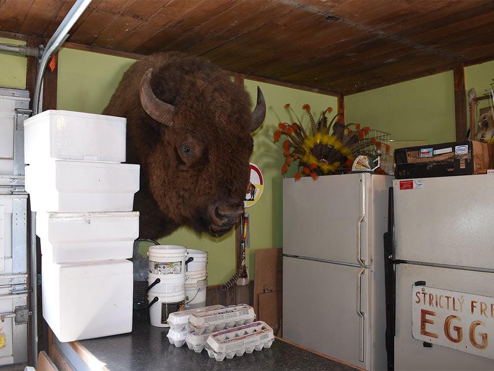 bison mount kummrow farms