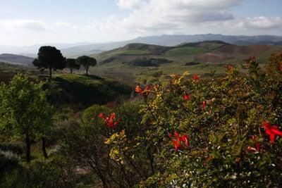 httpswww.saveur.comsitessaveur.comfilesimport2011images2011-027-SV136_-_Sicily_-_20.jpg