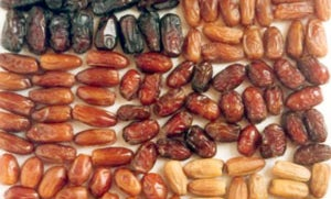 A World of Dates
