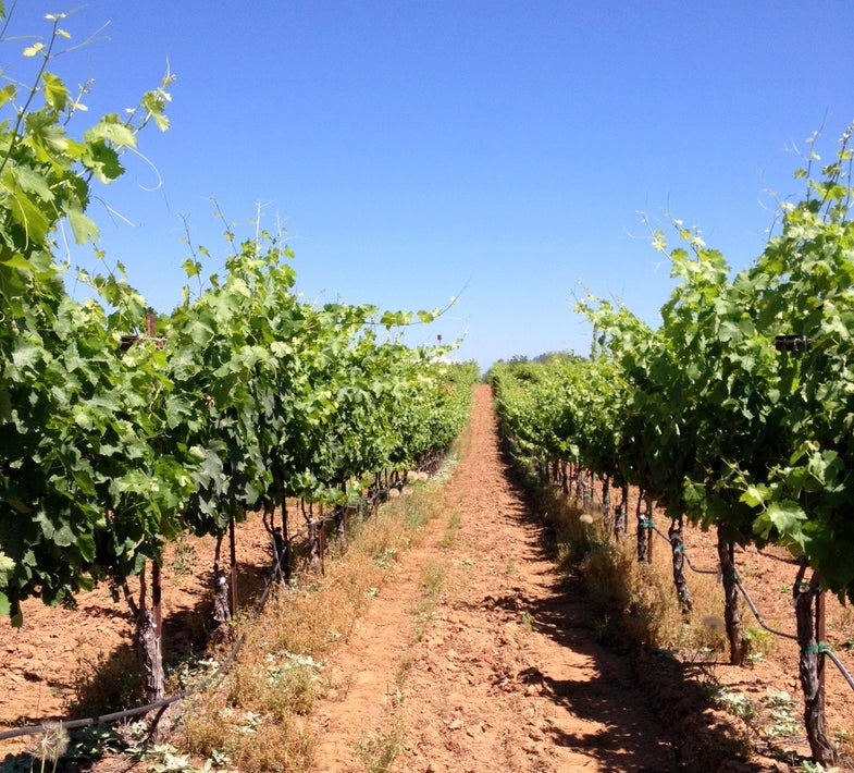 Wineries of a California Gold Rush County