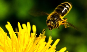 Nefarious Criminals Can't Stop Stealing Bee Hives
